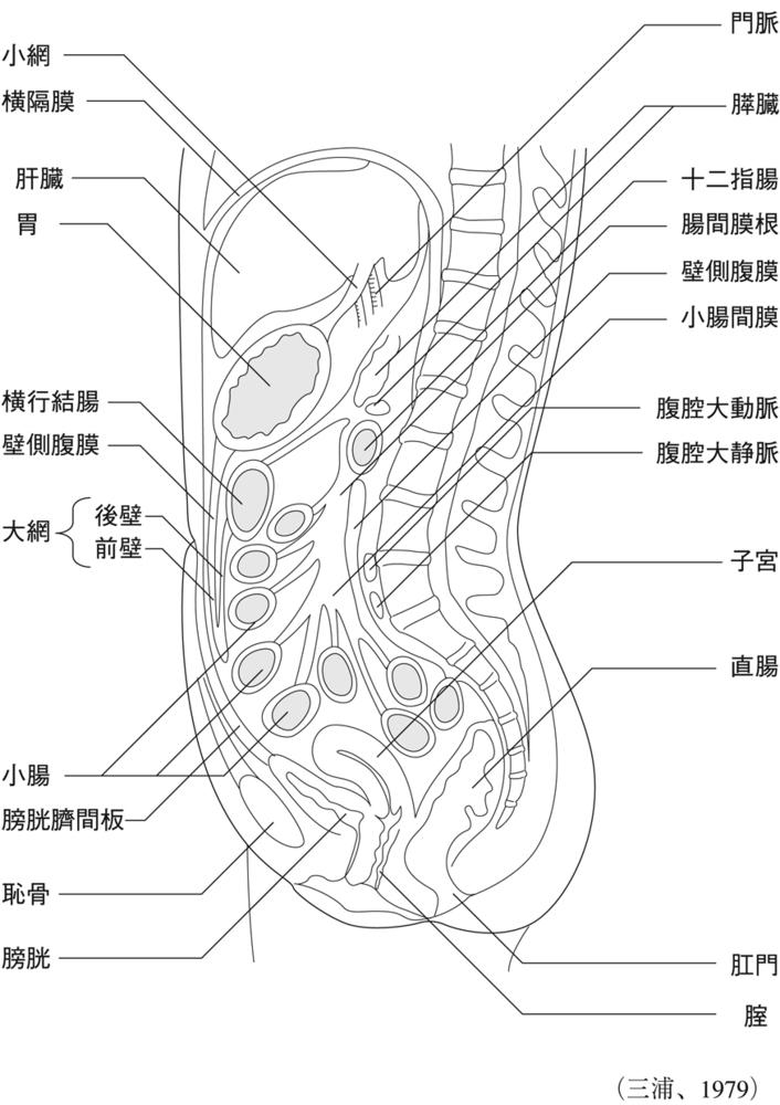 腹膜とは|食道・胃・腸の病気|分類から調べる|病気を調べる|病気 ...